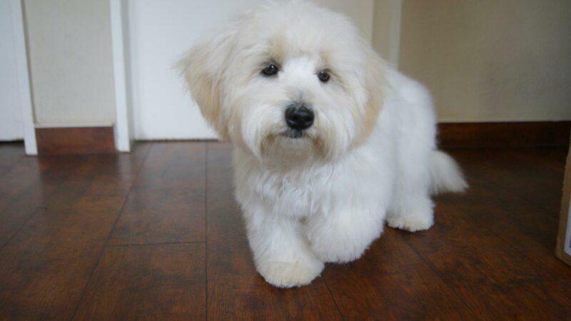 Verfiltztes Hundefell- Ein Grund zur Schur?