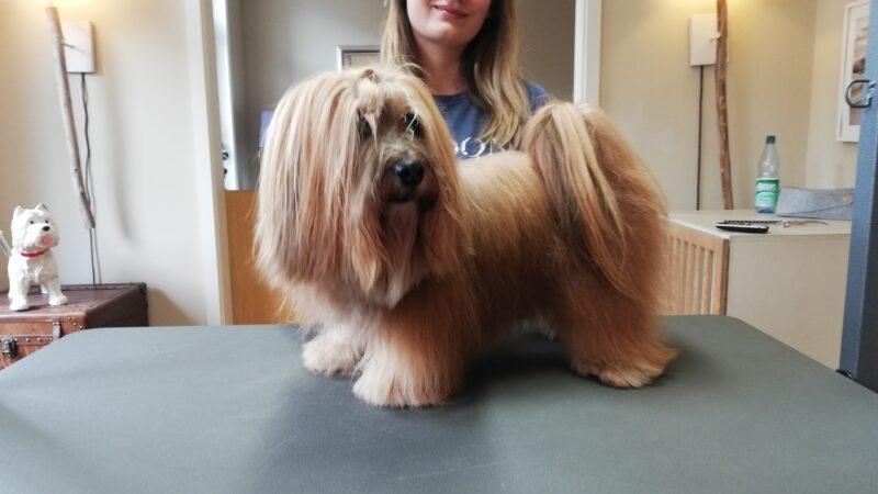 Fellpflege Kurse Fuer Hundebsitzer