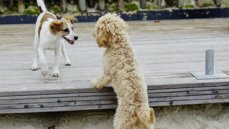 Gordon Hundeshop Beratung