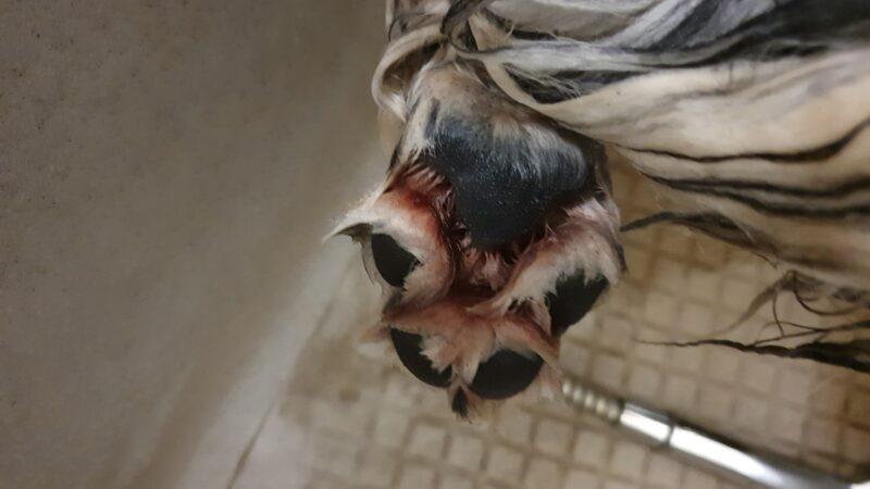 Saubere Hundepfoten Bei Gordon Hundesalon