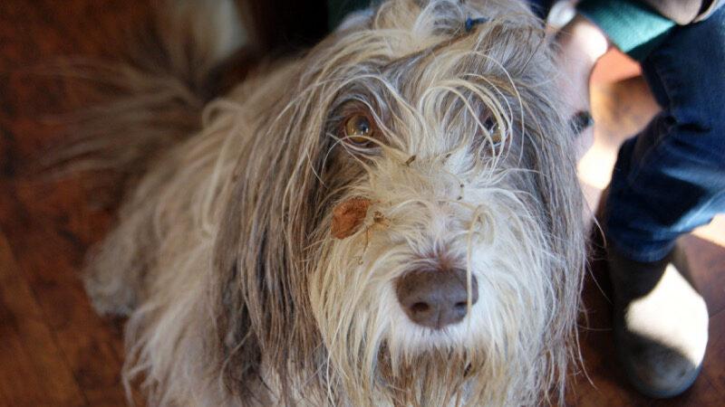 Warum stinkt mein Hund
