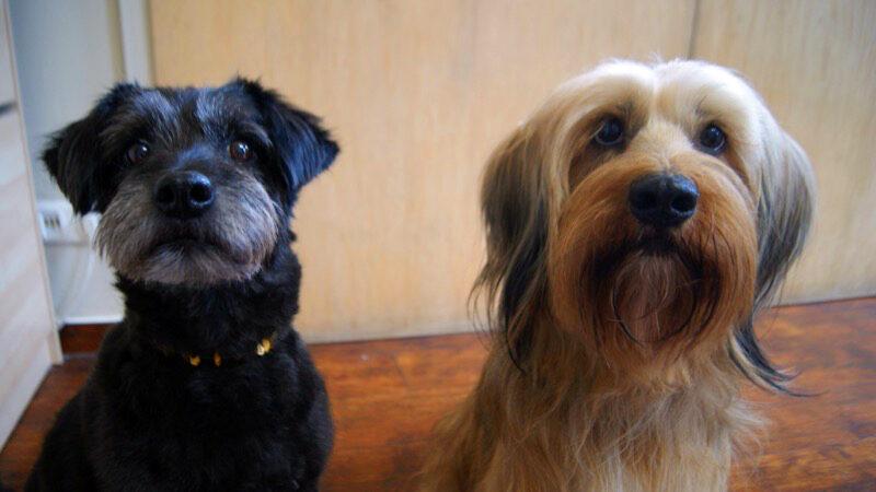 Mischlinge und Tierschutzhunde im Hundesalon