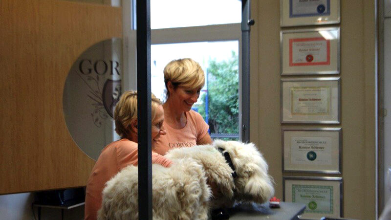 Tierschutzhunde im Hundesalon Gordon – Der gepflegte Hund