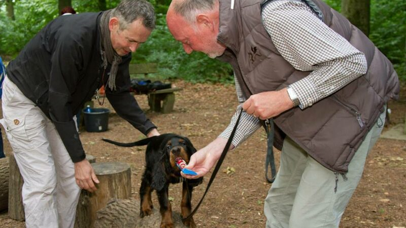 Lernen Hunde schneller oder besser mit Futterbelohnung oder mit alternativen Formen der positiven Bestätigung?
