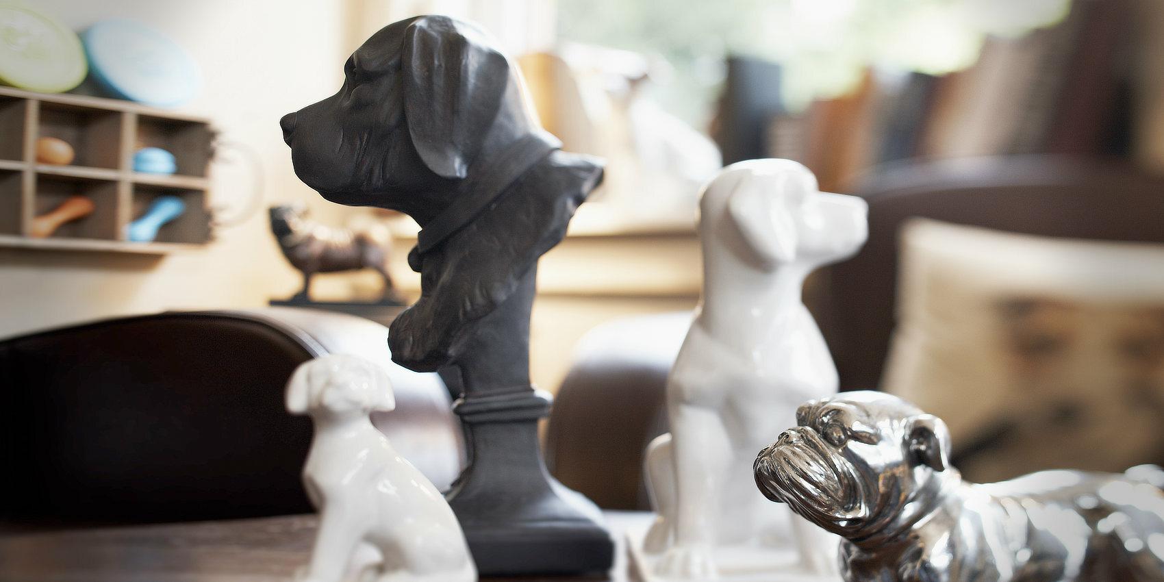Coach und Beratung für bestehende Hundesalons